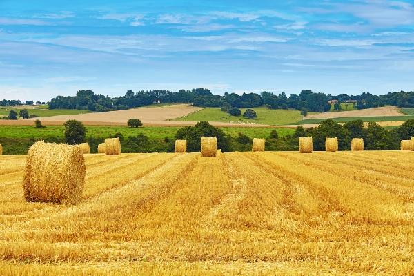 suramortissement-et-pour-le-secteur-agricole-