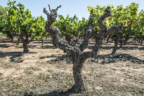 domaine-viticole-:-quelle-valeur-pour-quel-amortissement-?