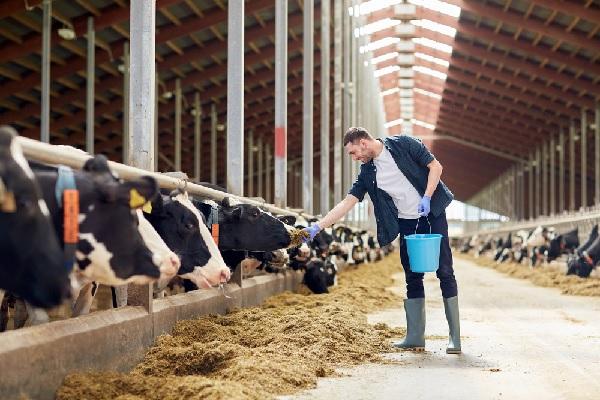 coronavirus-:-du-renfort-pour-le-secteur-agricole-!