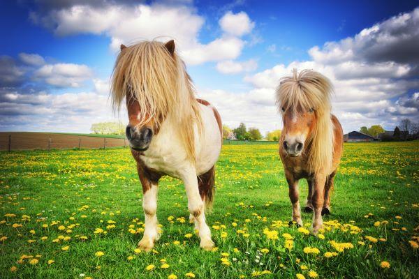 coronavirus-(covid-19)-:-des-precisions-pour-l'aide-financiere-accordee-aux-centres-equestres-et-poneys-clubs